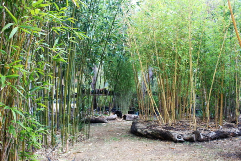 Maleeya's Bamboo Nursery